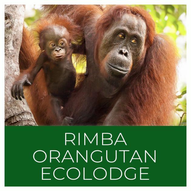 Rimba Orangutan Ecolodge Indonesia