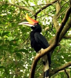 Indonesia native bird wildlife tour