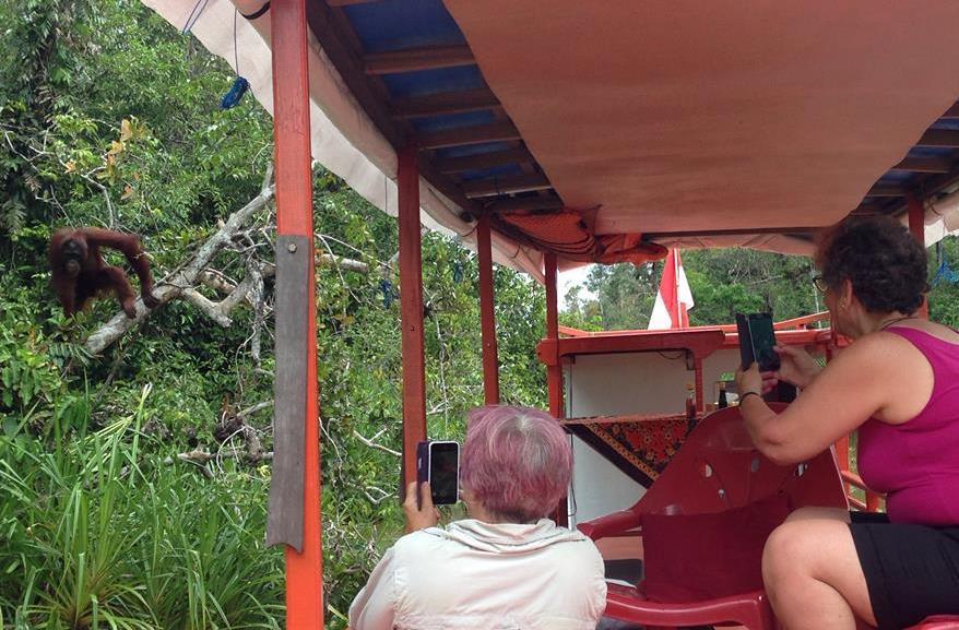 klotok in tanjung puting national park