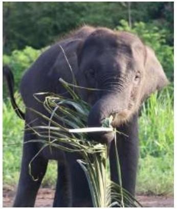 Wilf Elephants in Way Kambas