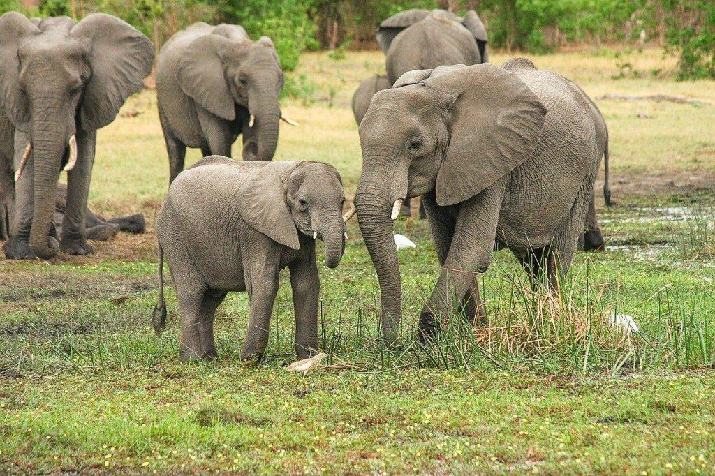 Indonesia Wildlife Holiday Elephant